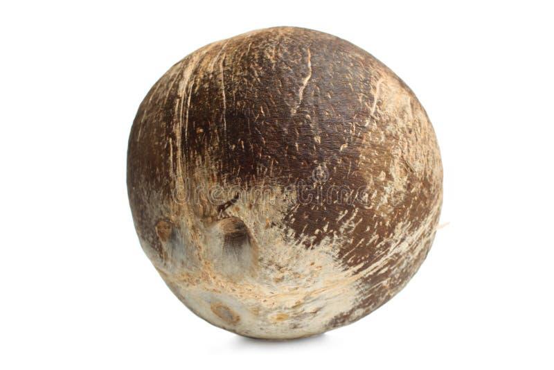Tropisk exotisk kokosnöt royaltyfri foto