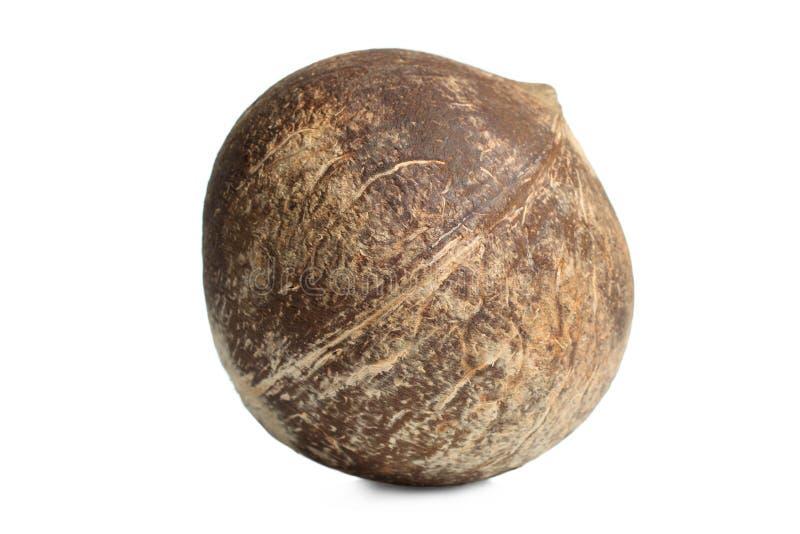 Tropisk exotisk kokosnöt arkivfoton