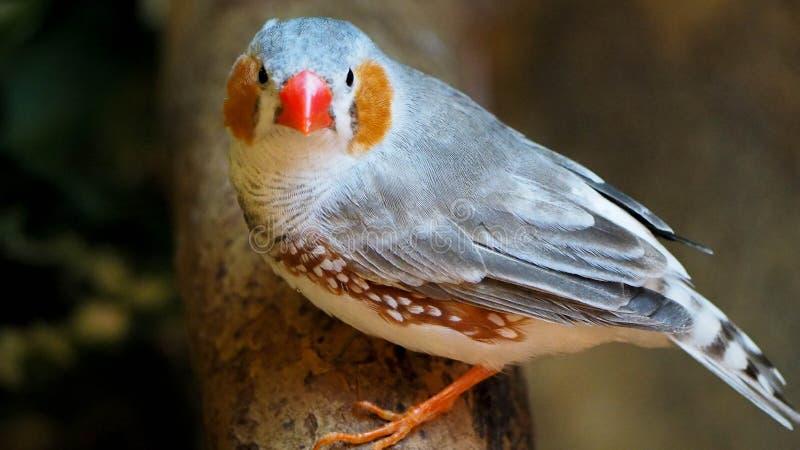 Tropisk fågel royaltyfri bild