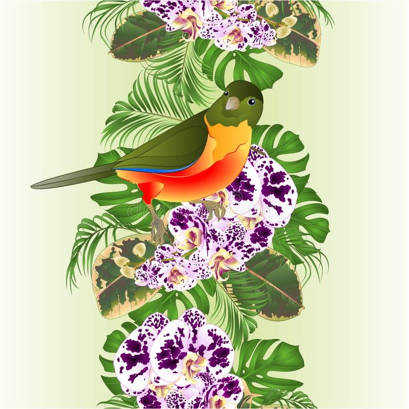 Tropisk fågel för vertikal bakgrund för gräns sömlös med ordning för prickig Phalaenopsis för blommaorkidé blom-, med härligt stock illustrationer