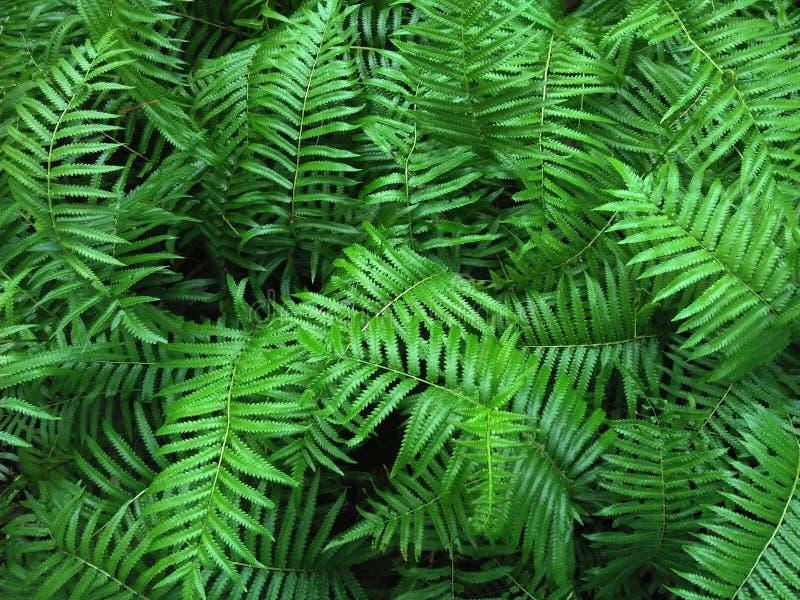 Tropisk Fern Bushes gräsplansäsong arkivfoton