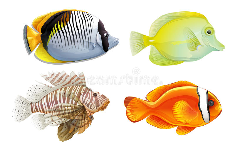 tropisk fisk royaltyfri illustrationer