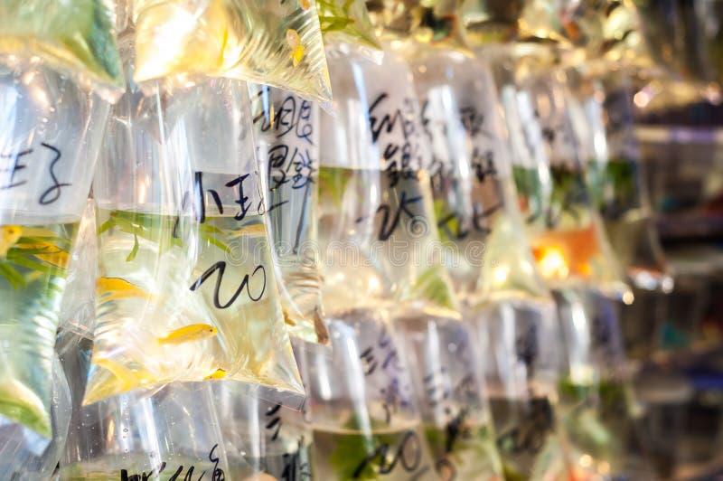 Tropisk fisk som hänger i påsar på den Tung Choi Street guldfiskmarknaden, Hong Kong royaltyfri foto