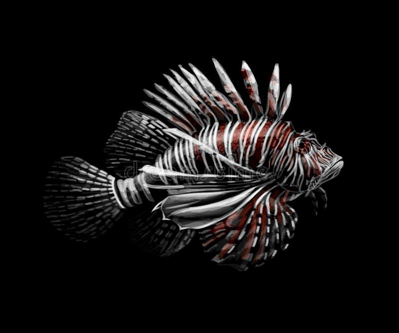 tropisk fisk Stående av en lionfish på en svart bakgrund stock illustrationer