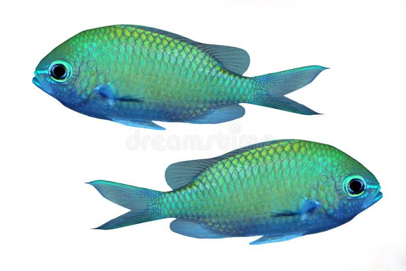 tropisk fiskrev arkivbild