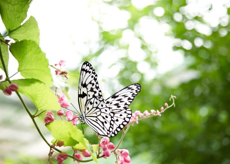 tropisk fjäril arkivfoto