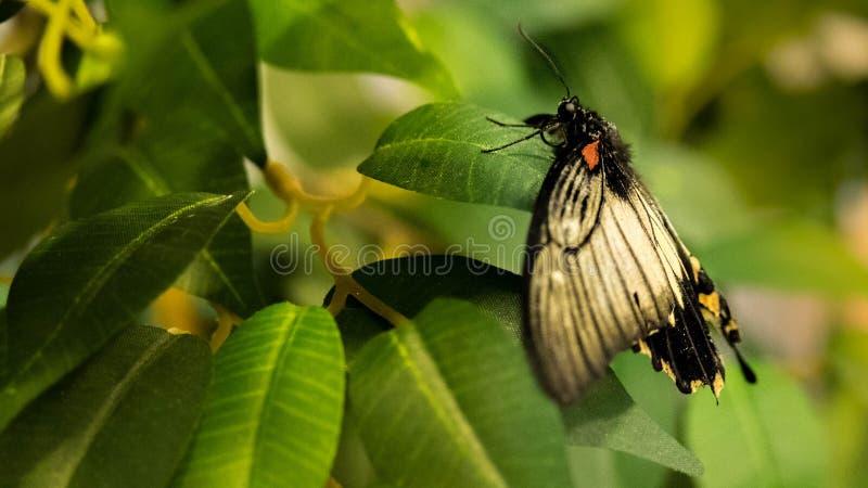 Tropisk fjäril arkivbild