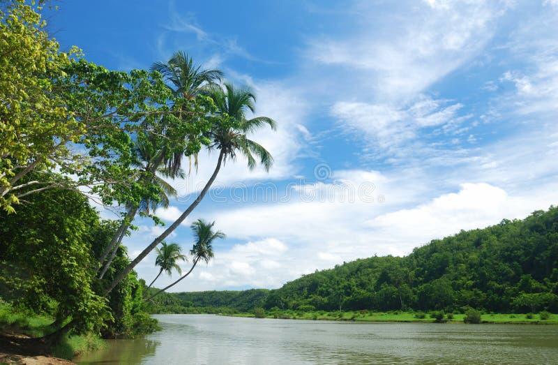 tropisk flod arkivfoto