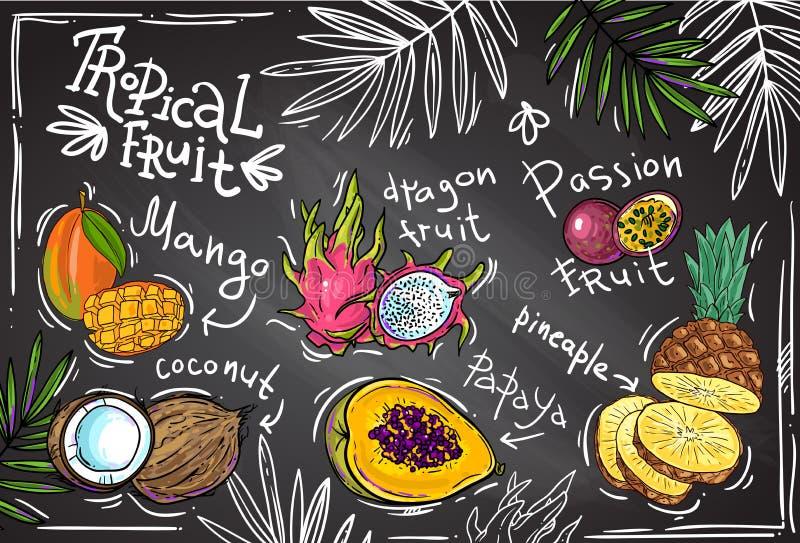 Tropisk frukt för vektor vektor illustrationer