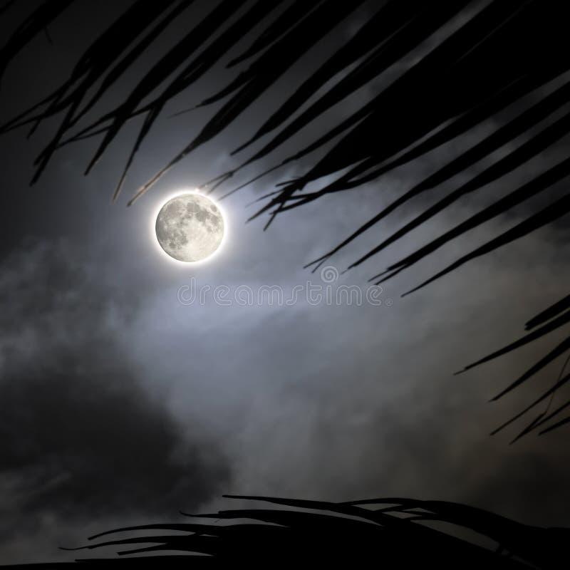 tropisk fullmånenatt arkivbilder