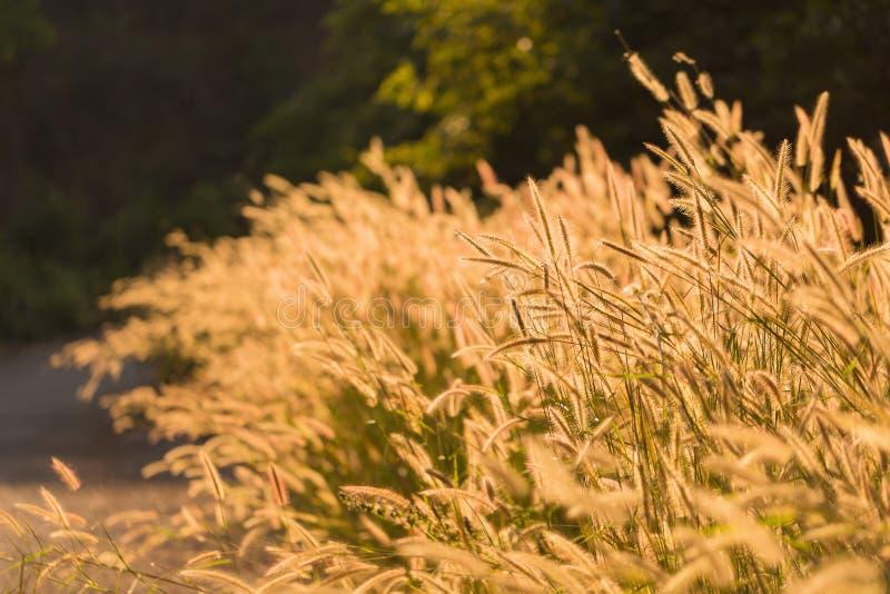 tropisk gräsblomma för kontur på solnedgångbakgrund royaltyfri foto