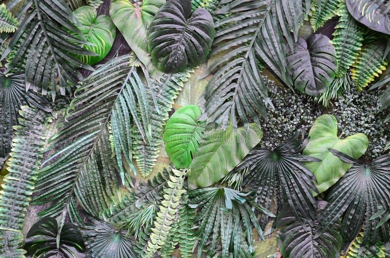 Tropisk gräsplan lämnar bakgrund, ormbunke, gömma i handflatan och det Monstera Deliciosa bladet på väggen arkivfoton