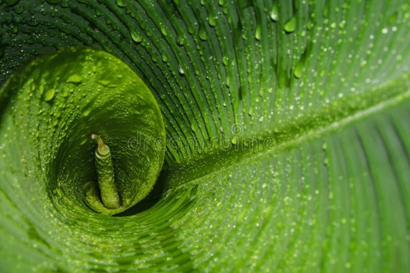 Tropisk gräsplan och vått bananblad royaltyfri foto