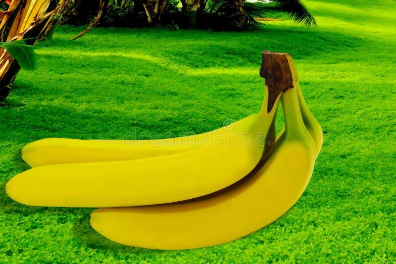Tropisk gul bakgrund för Banane frukt isolerad natur arkivbilder