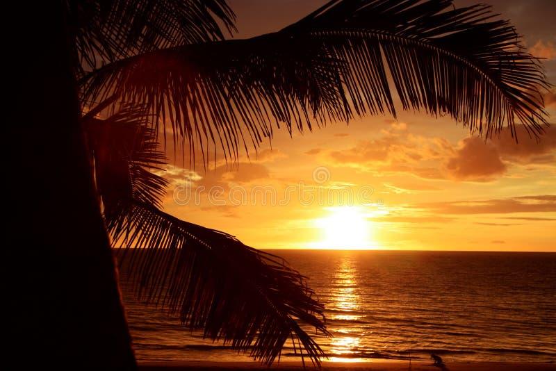 tropisk guld- solnedgång royaltyfri bild