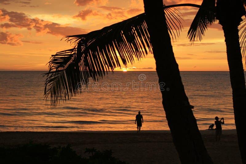 tropisk guld- solnedgång royaltyfria bilder