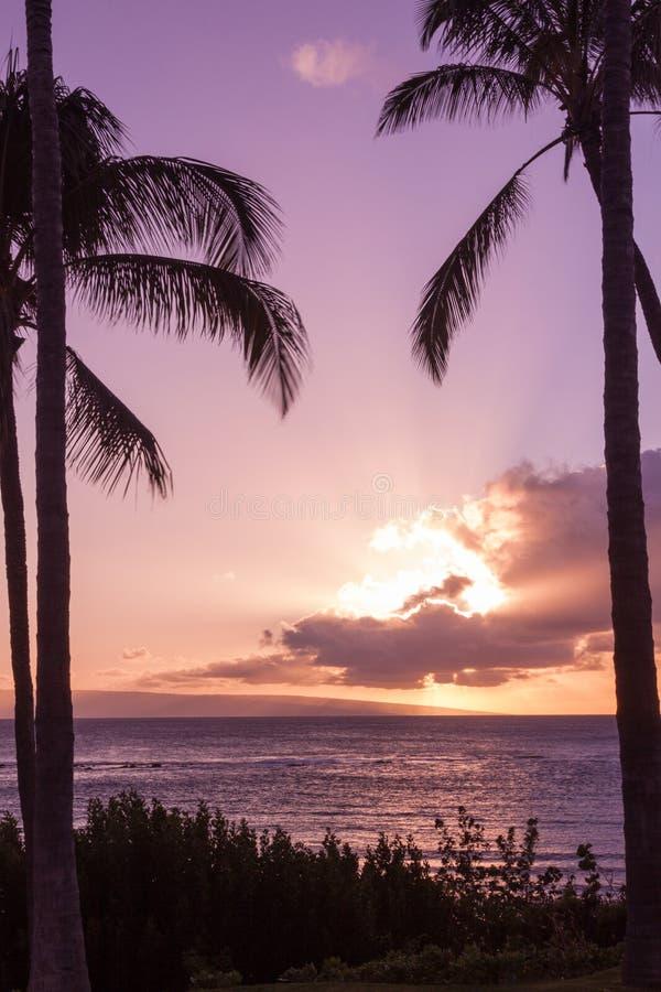 Tropisk hawaiansk solnedgång på Maui arkivfoto