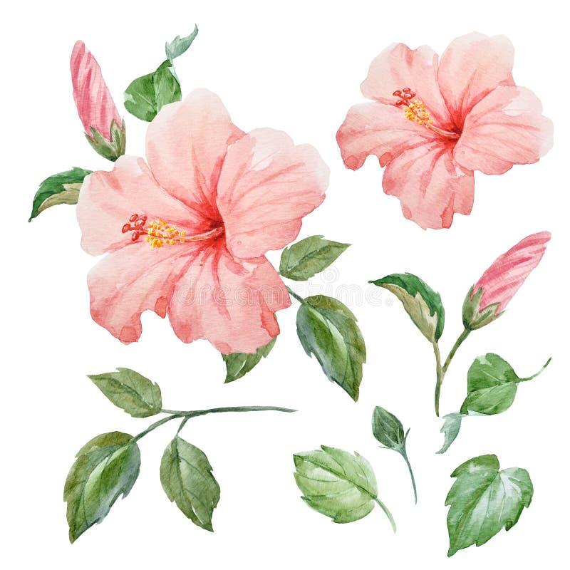 Tropisk hibiskusblomma för vattenfärg vektor illustrationer