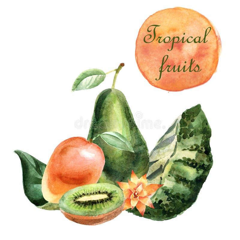 Tropisk illustration för vattenfärg med frukter och växter på en vit bakgrund stock illustrationer