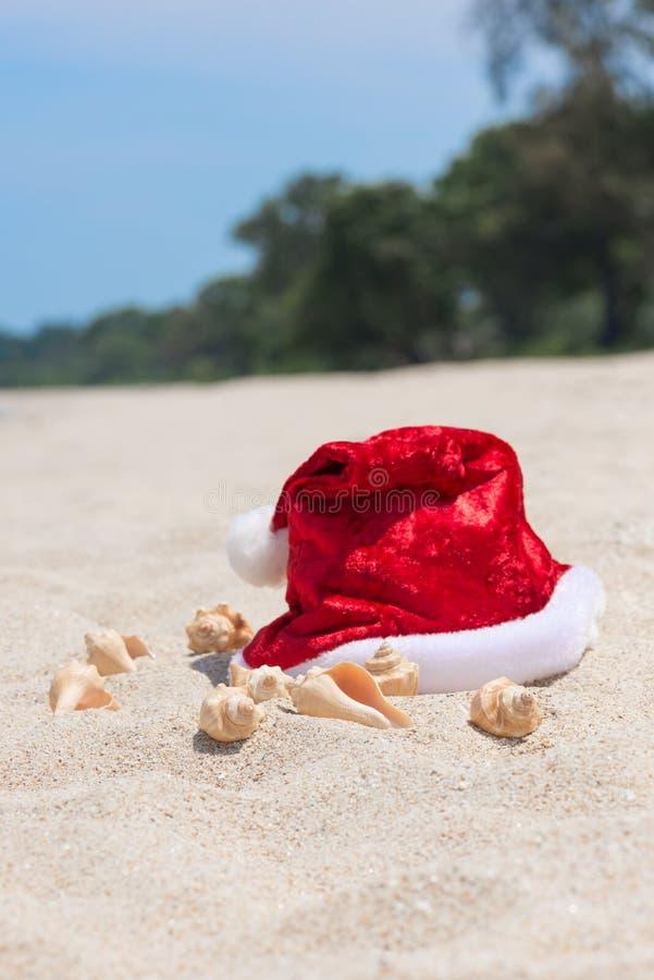tropisk jul fotografering för bildbyråer
