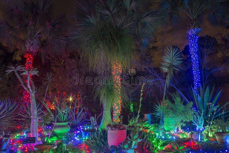 Tropisk julträdgård royaltyfri bild