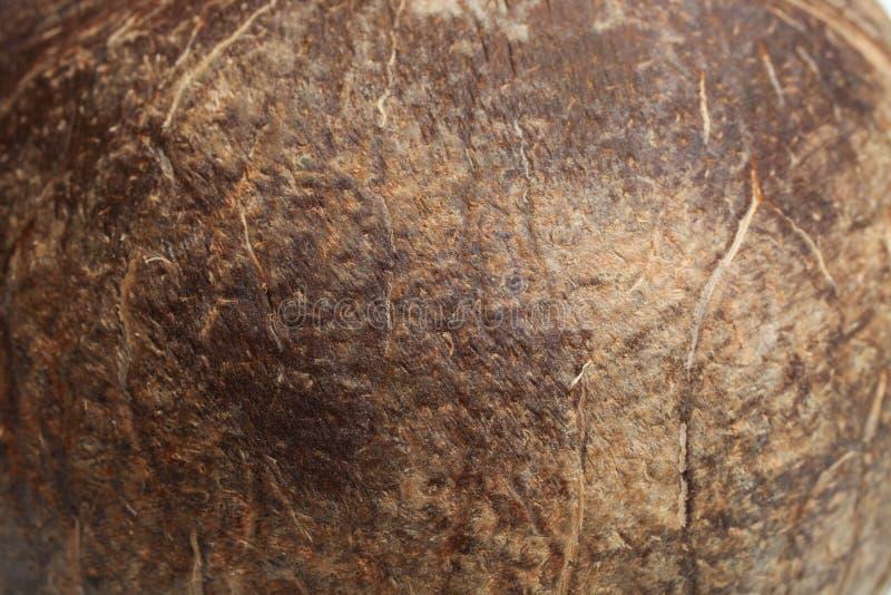 Tropisk kokosnöt, textur royaltyfria foton