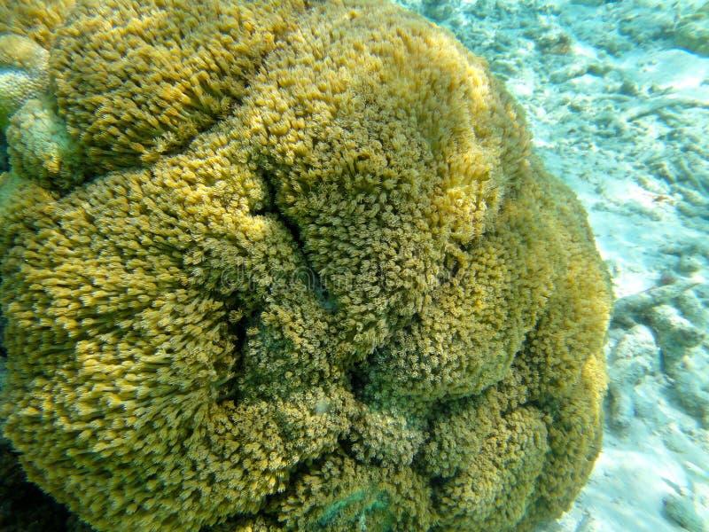 Tropisk korall arkivbilder