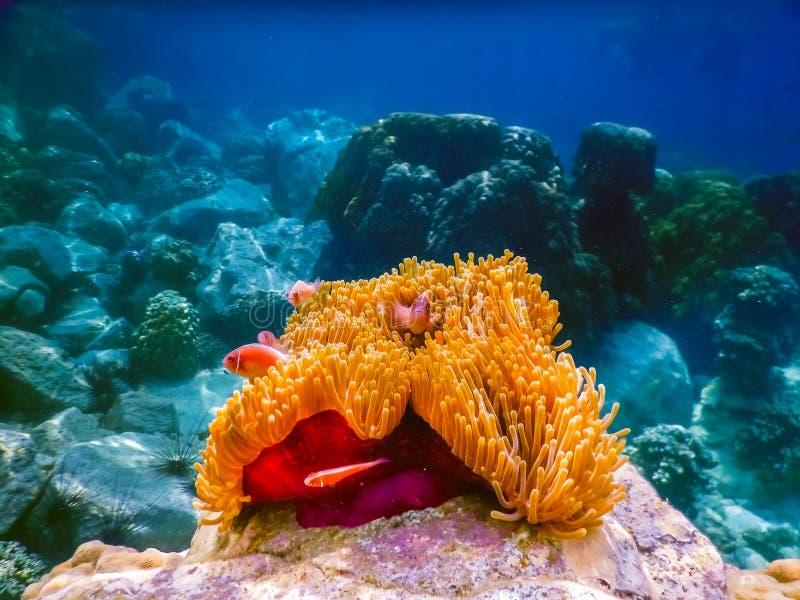 Tropisk korallrev i Thailand arkivfoto