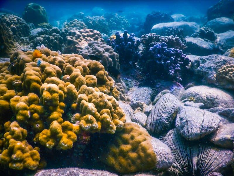 Tropisk korallrev i Thailand royaltyfria bilder
