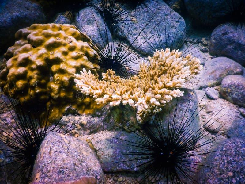 Tropisk korallrev i Thailand royaltyfri bild