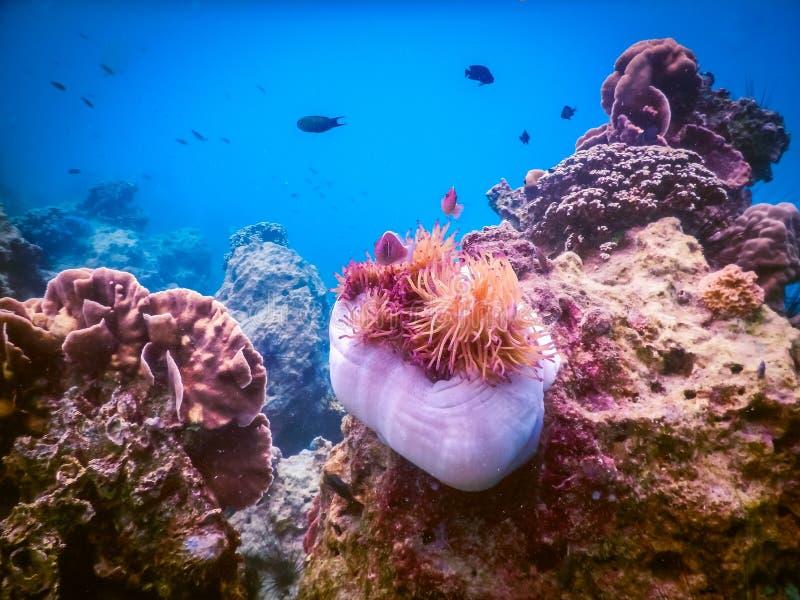 Tropisk korallrev i Thailand royaltyfri fotografi