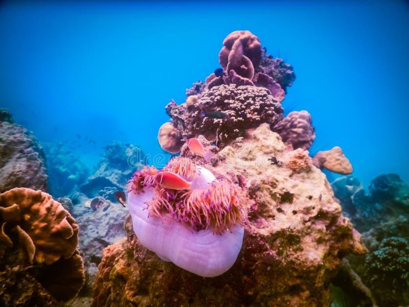 Tropisk korallrev i Thailand royaltyfri foto