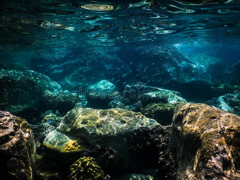 Tropisk korallrev i Thailand fotografering för bildbyråer