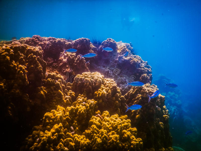 Tropisk korallrev i Thailand royaltyfria foton
