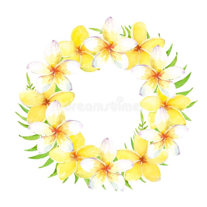Tropisk krans för vattenfärg med plumeriablommor och sidor Kan användas för kort och att gifta sig inbjudan, sparar daten royaltyfri illustrationer