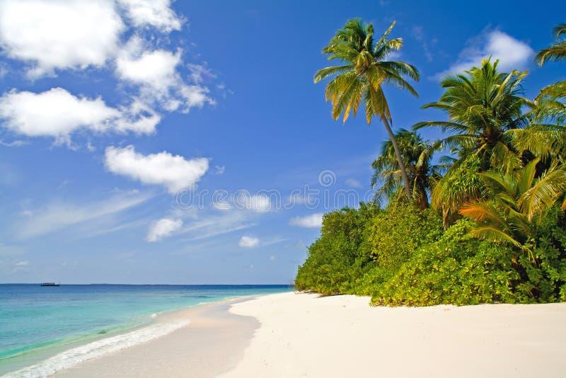 tropisk kustlinje royaltyfri fotografi