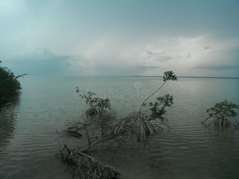 Tropisk lös kustlinje arkivfoto