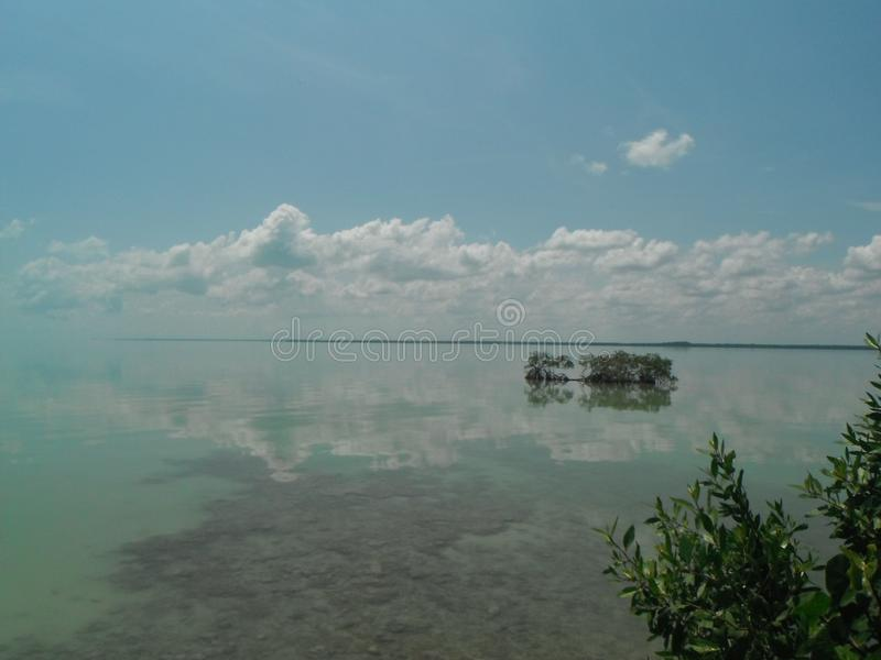 Tropisk lös kustlinje med klart vatten royaltyfri foto