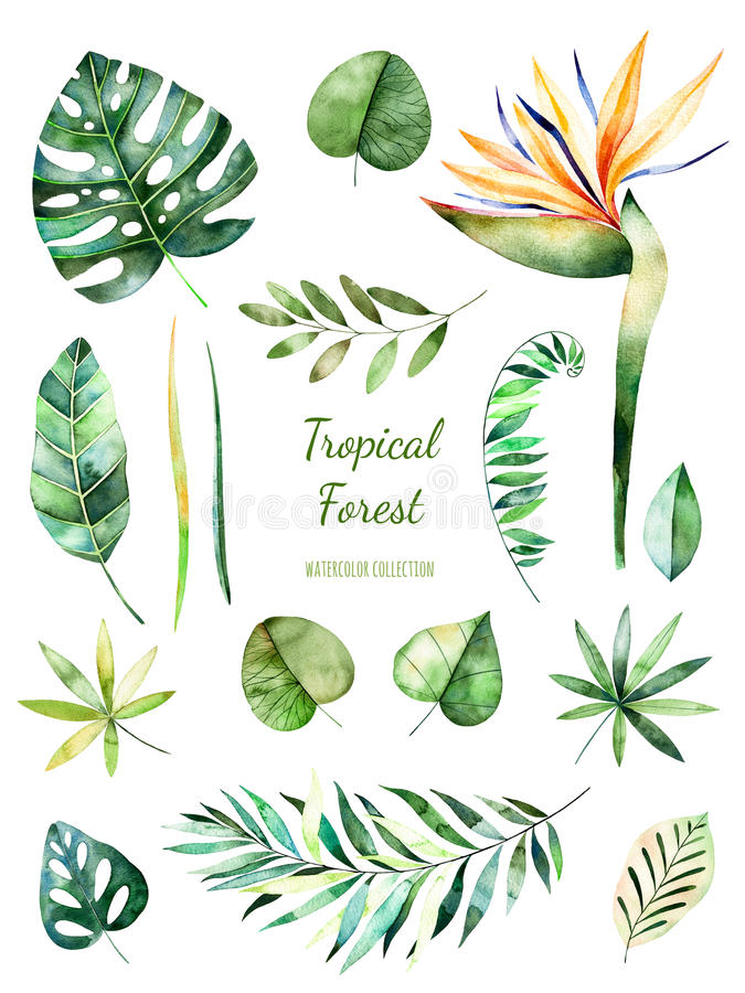 Tropisk lövrik samling Blom- beståndsdelar för Handpainted vattenfärg Vattenfärgsidor, filialer, blomma vektor illustrationer