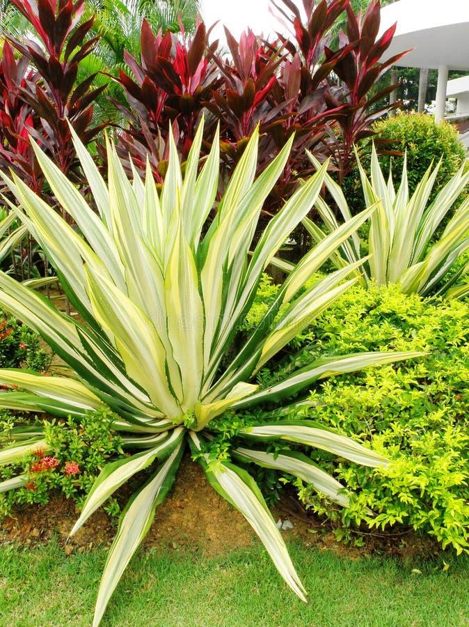 tropisk landskap stil