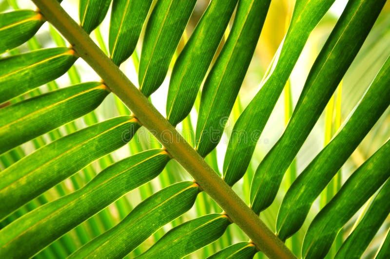 tropisk leaf arkivfoto