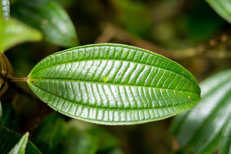 tropisk leaf royaltyfri bild