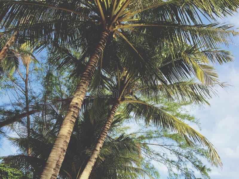 tropisk liggande arkivbild