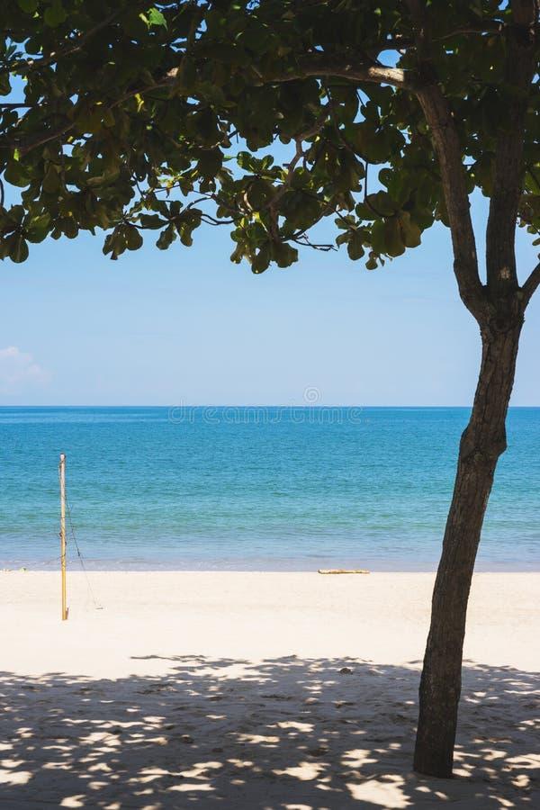 tropisk liggande Strand med det vita sand- och blåtthavet Palmträd och tropisk varm sommar royaltyfria bilder