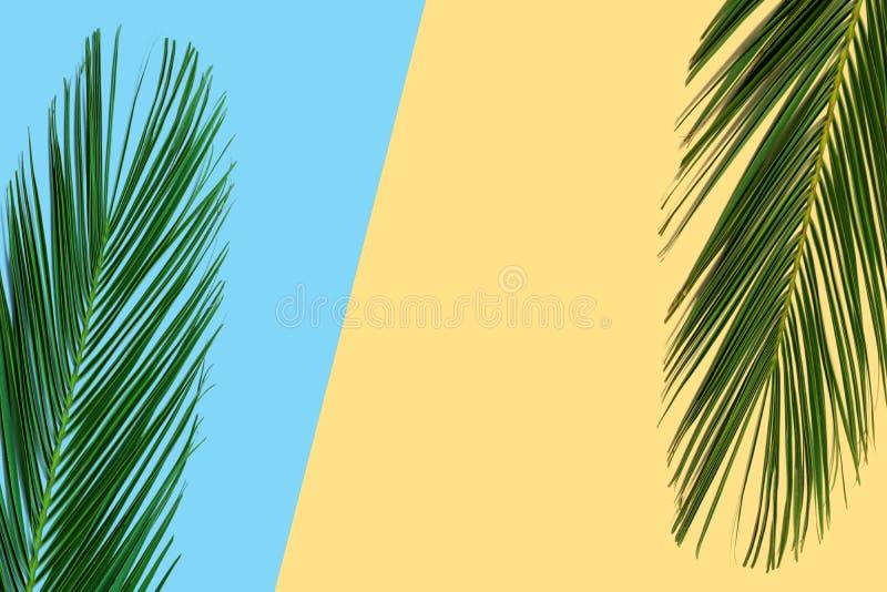 Tropisk ljus färgrik bakgrund med exotiska tropiska palmblad arkivfoto