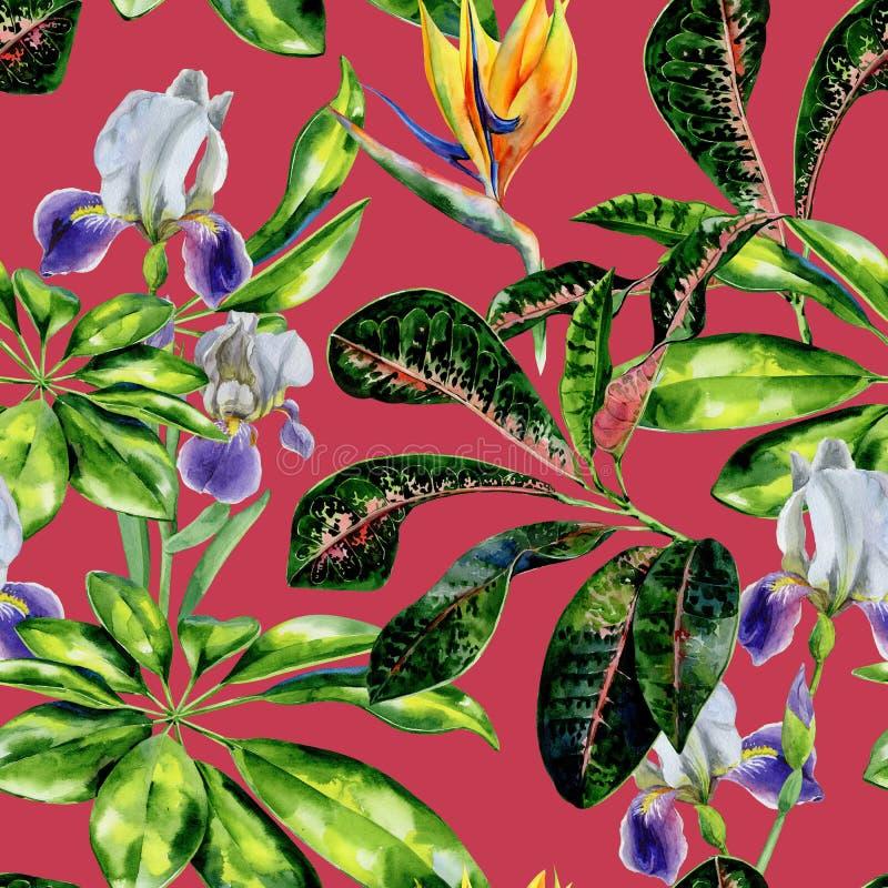 Tropisk modell för sömlös vattenfärg med scheffleraväxt- och irisblommor, crotonsidor och strelitzia stock illustrationer