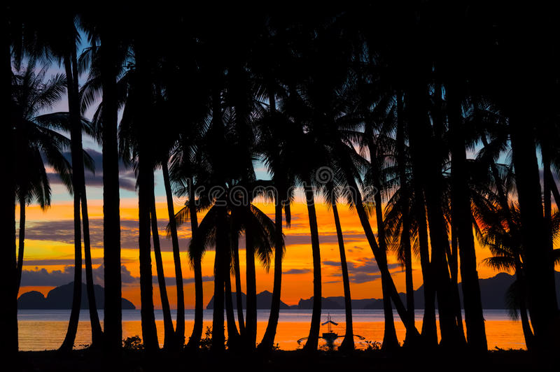 Tropisk natt med konturer av palmträd. royaltyfri fotografi