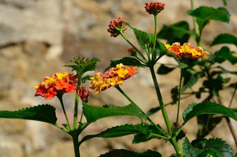 Tropisk natur - orange blomma royaltyfri foto