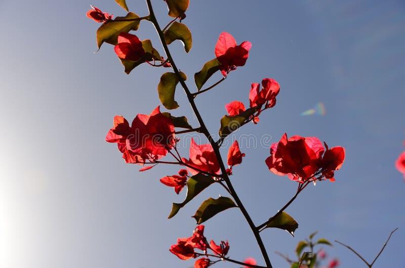 Tropisk natur - röd blomma fotografering för bildbyråer