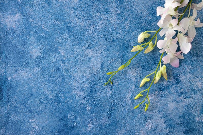 tropisk orkidé på blå och vit bakgrund royaltyfri fotografi